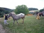 převádění koní
